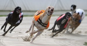 Best Greyhound Racing Odds UK 2021