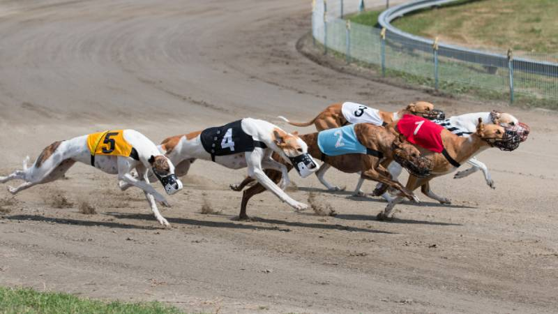 Racing dogs betting strategy royal rumble 2021 betting odds