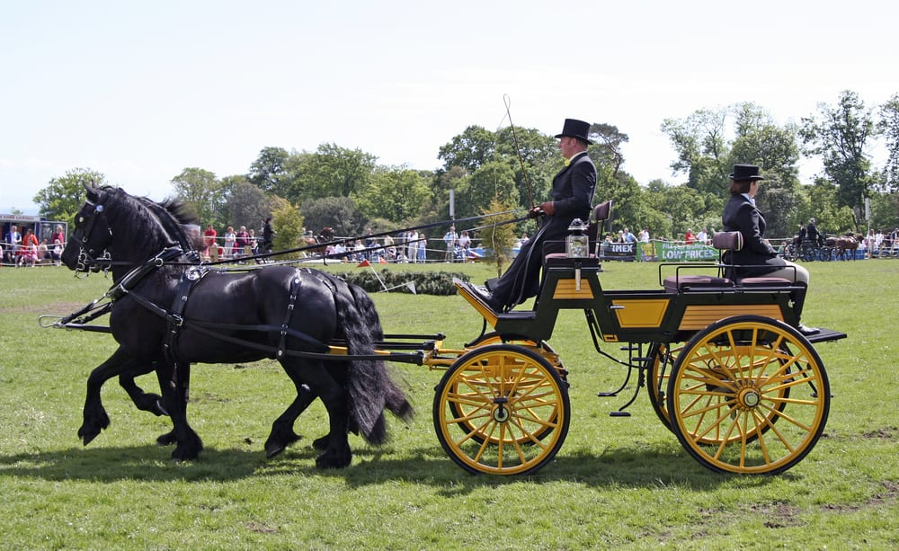 posh horse racing