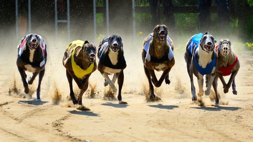 greyhound racetracks uk