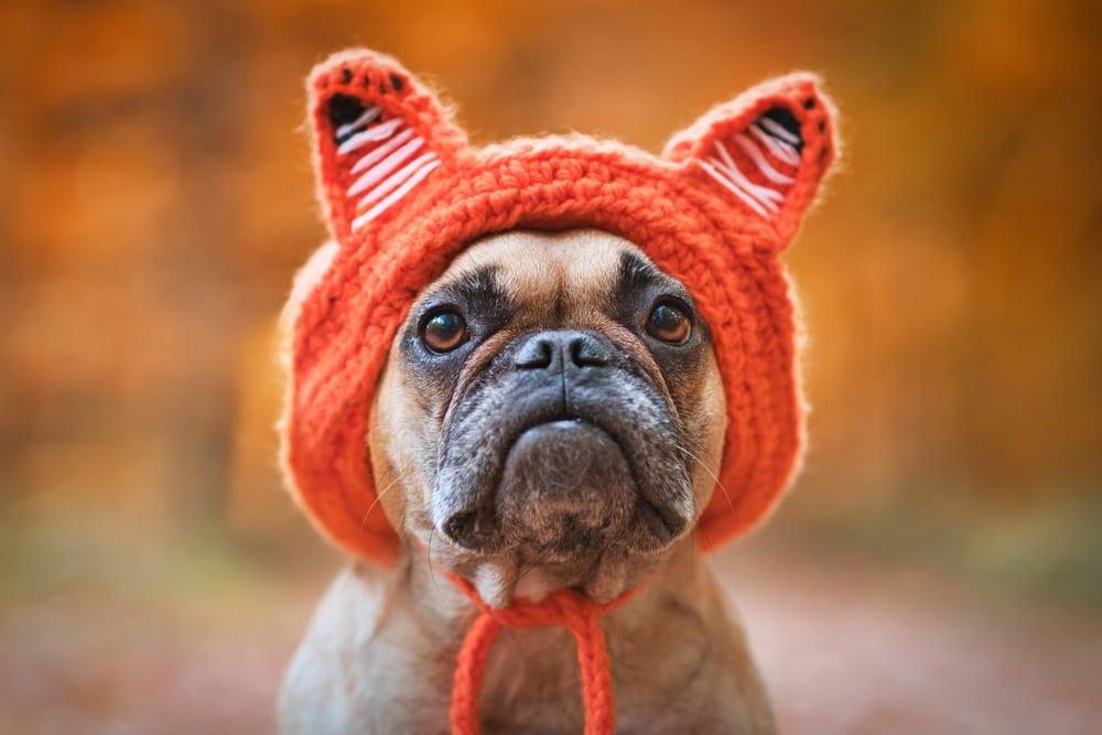 wear the fox hat